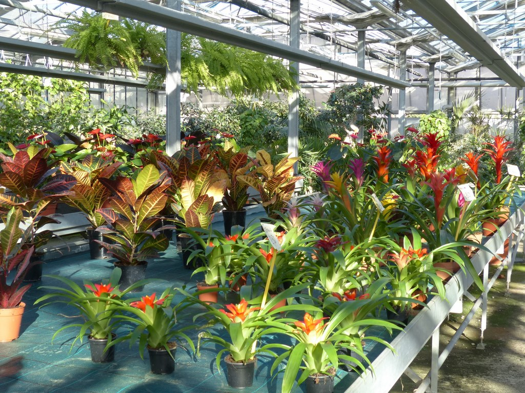 Il giardino dei giorgi lavagna coltivazione vendita for Piante vendita