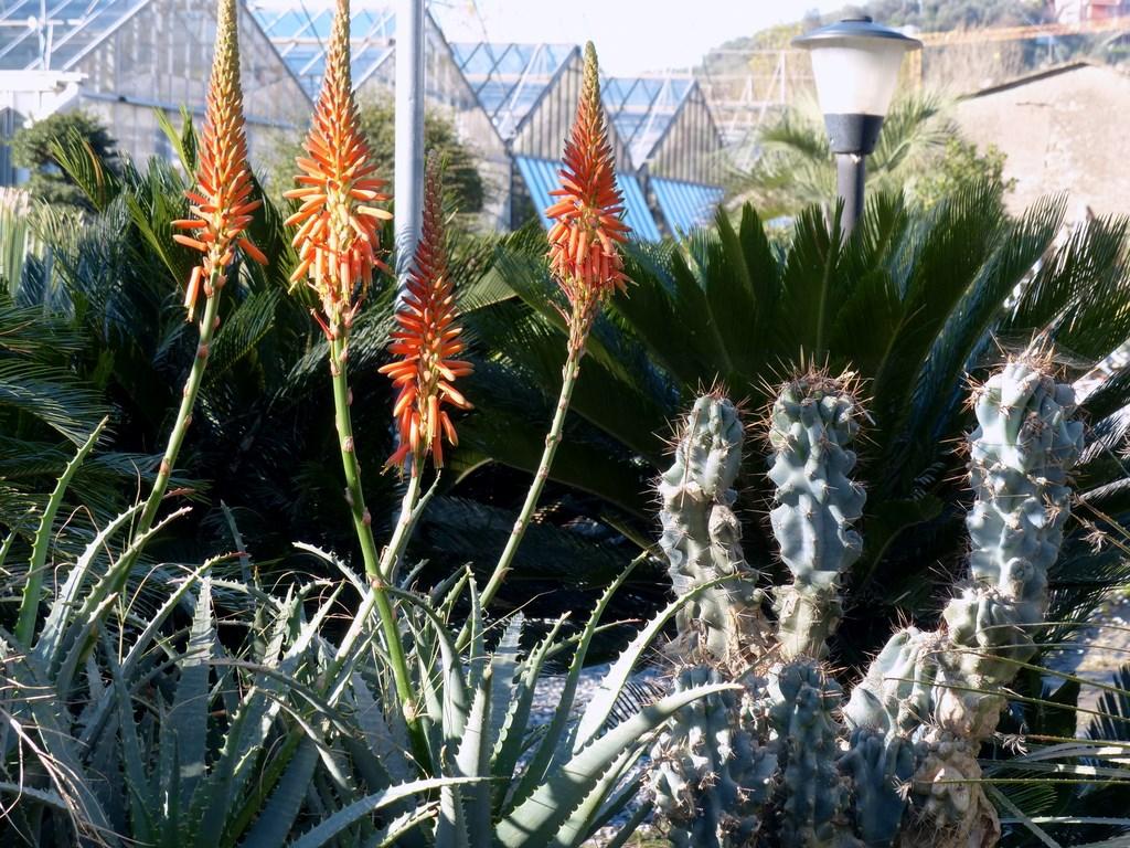 Piante tropicali da giardino piante tropicali da giardino for Piante grasse ornamentali