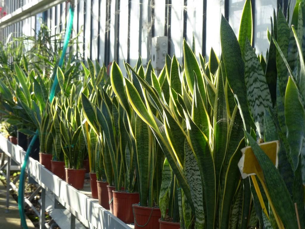 Il giardino dei giorgi lavagna coltivazione vendita for Piante da cespuglio